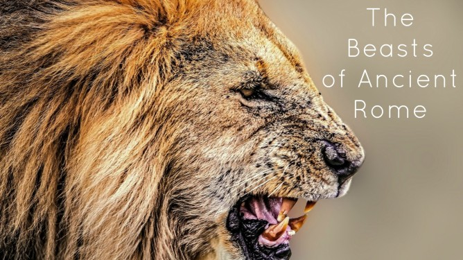 lion rome.jpg