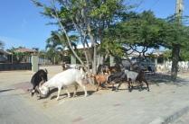 Aruba National Park